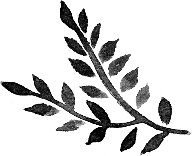 Plante aquarelle